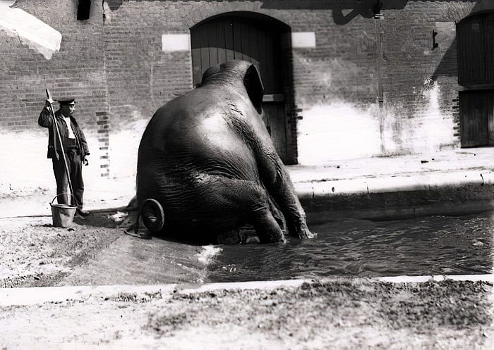 Elefante bañándose de Frederick William Bond
