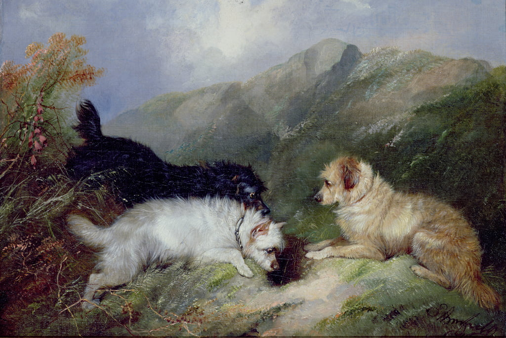 Terriers Rabbiting de George Armfield